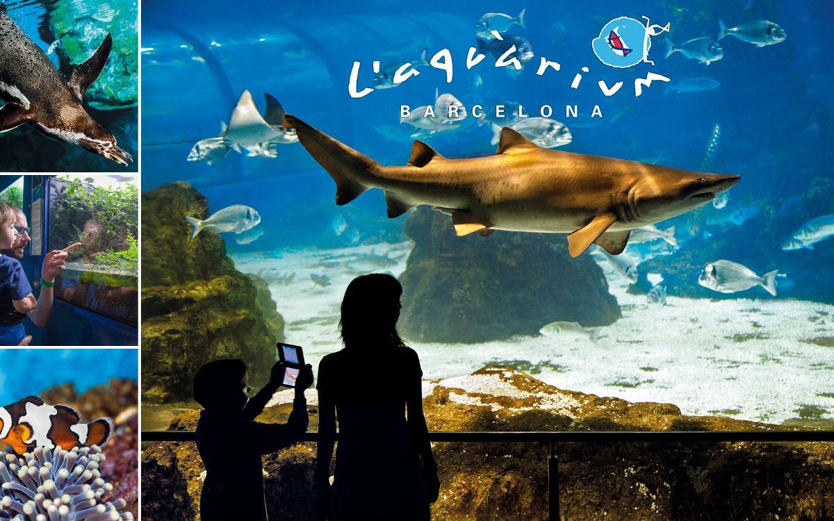 Descuento de 5€ por persona en L'Aquàrium para las familias blaugrana